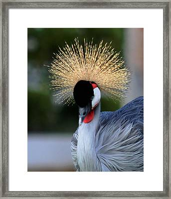 Crowned Framed Print
