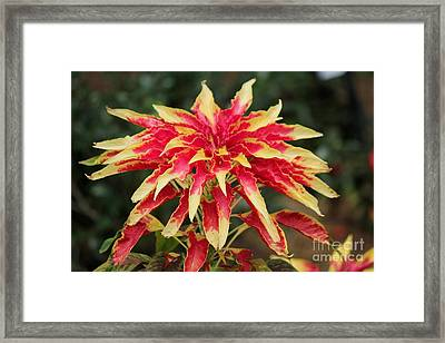 Crowned With Color Framed Print