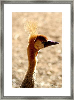 Crowning Glory Framed Print by Dick Botkin