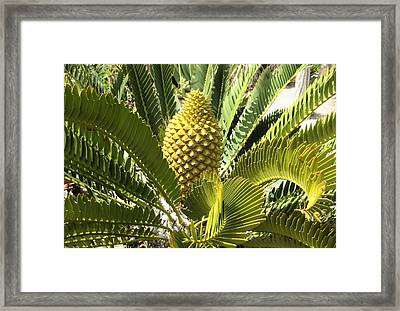 Crowning Glory Framed Print