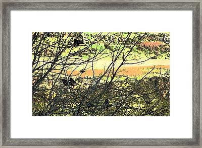 Crows And Two Blackbirds					 Framed Print