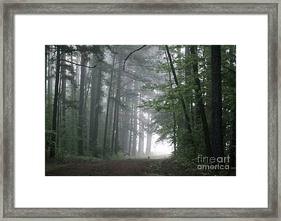 Crows In The Woods Framed Print