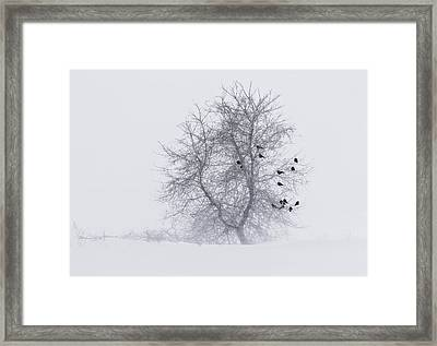 Crows On Tree In Winter Snow Storm Framed Print