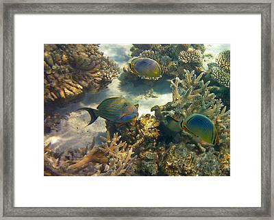 Cruisin Framed Print by Corinne Rhode