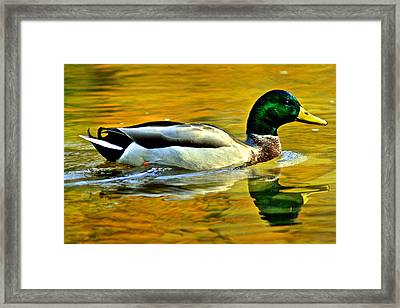 Cruisin Framed Print by Frozen in Time Fine Art Photography