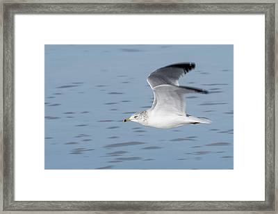 Cruising Altitude Framed Print