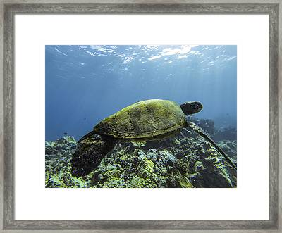 Cruising The Reef Framed Print by Brad Scott