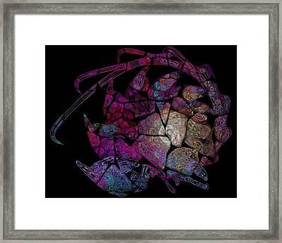 Crustacean Framed Print by Amanda Moore
