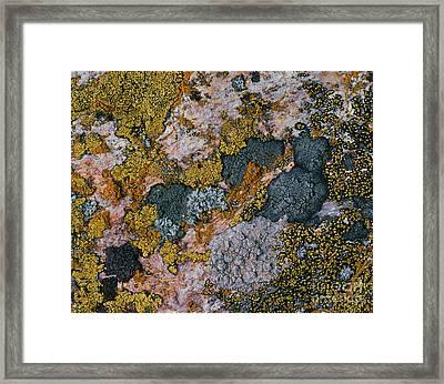 Crustose Lichens Framed Print by Hermann Eisenbeiss