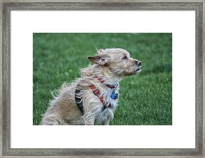 Framed Print featuring the photograph Cruz Enjoying A Warm Gentle Breeze by Thomas Woolworth