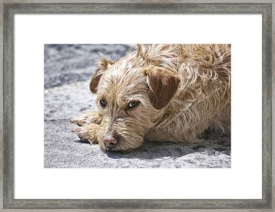Framed Print featuring the photograph Cruz You Looking At Me by Thomas Woolworth