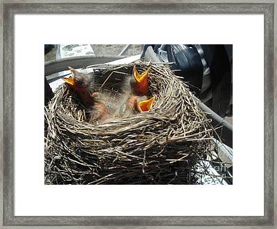 Cry Framed Print by Amanda Reinier