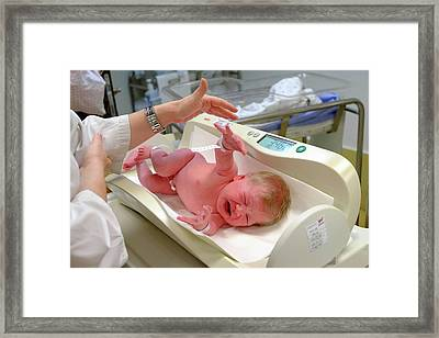 Crying Baby Girl Is Being Weighed Framed Print by Photostock-israel