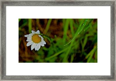 Crying For Love  Framed Print by Tim Rice