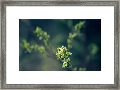 Cryo Green Framed Print by Matti Ollikainen