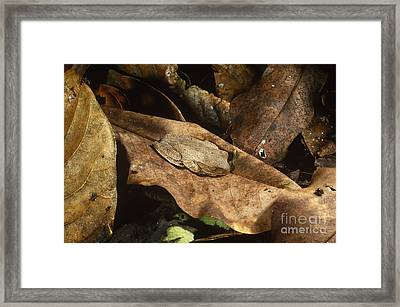 Cryptic Frog Framed Print by Gregory G. Dimijian, M.D.