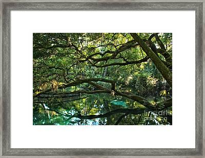 Crystal Clear Fern Hammock Waters Framed Print by Adam Jewell