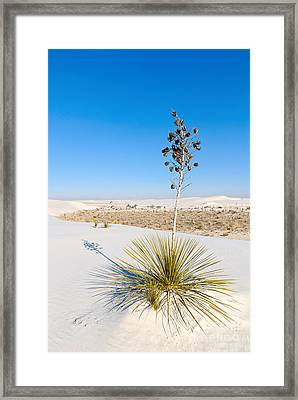 Crystal Dune Tree At White Sands National Monument In New Mexico. Framed Print