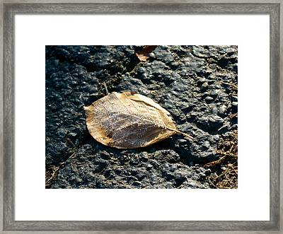 Crystal Leaf Framed Print by Azthet Photography