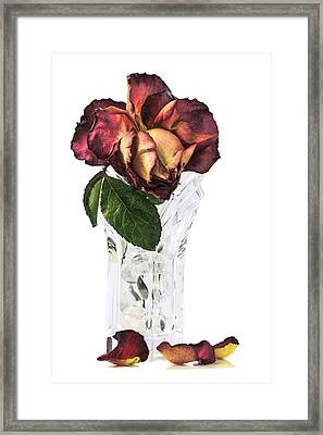 Crystal Rose Framed Print