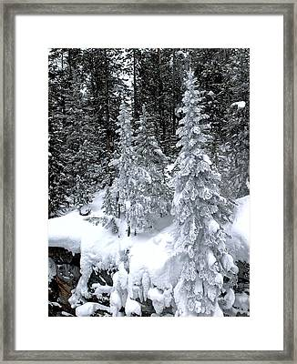 Crystal Trees Of Yellowstone Framed Print