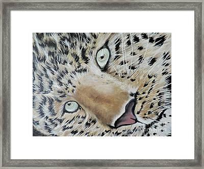 cub Framed Print by Dianna Lewis