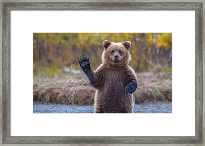 Cub Scouts Honor  Framed Print