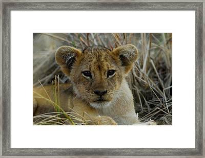 Cub Framed Print