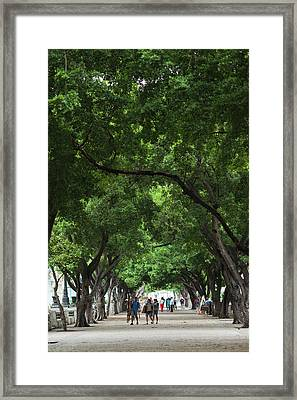 Cuba, Havana, Havana Vieja, Paseo De Framed Print by Walter Bibikow