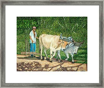 Cuban Countryman Framed Print by Manuel Lopez