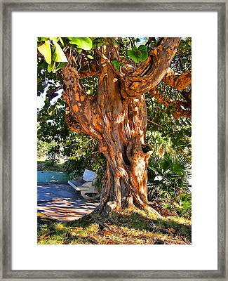 Cuban Sun.  In The Shade Of A Sheltering Tree. Framed Print by Andy Za