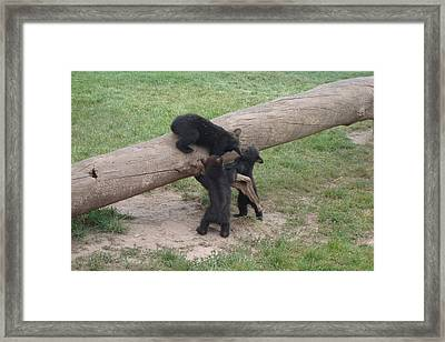 Cubs At Play Framed Print