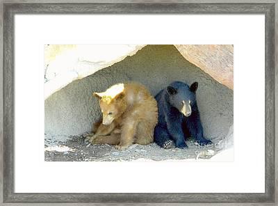 Cubs In A Pod Framed Print by Kim Petitt