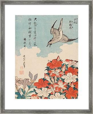 Cuckoo And Azaleas Framed Print