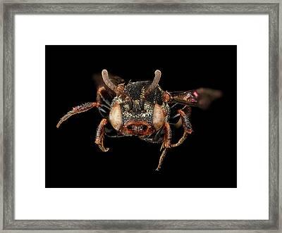 Cuckoo Bee Framed Print by Us Geological Survey