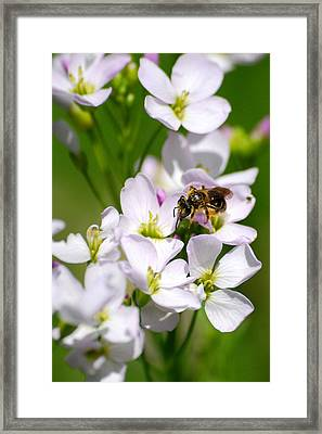 Cuckoo Flowers Framed Print by Christina Rollo