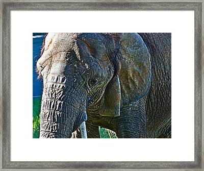 Cuddles In Search Framed Print