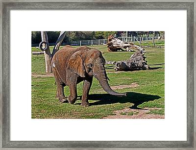 Cuddles Searching For Snacks Framed Print
