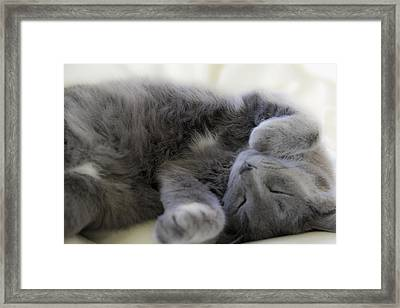 Cuddley Cat Framed Print