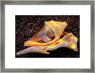 Cuddling Sands Framed Print