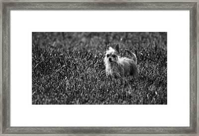Cujo Framed Print by Brian Stevens