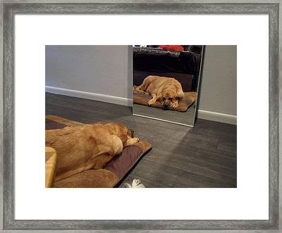 Cujo's Image Framed Print