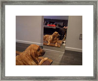 Cujo's Reflection Framed Print