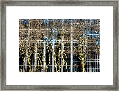 Culture And Nature Framed Print by Joanna Madloch