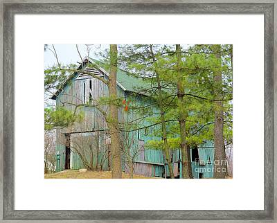 Culver Barn And Evergreen Framed Print by Tina M Wenger