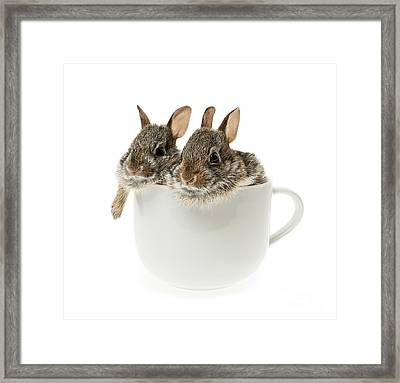 Cup Of Bunnies Framed Print