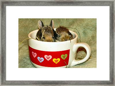 Cup Of Cuddles Framed Print by Art Dingo