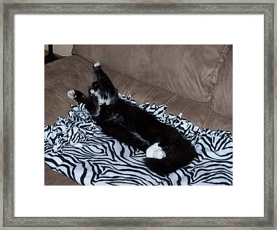 Cupcake Lounging Framed Print by Gene Ritchhart