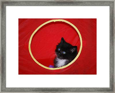 Cupcake's  Portrait Framed Print