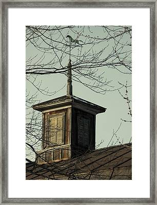 Cupola Through The Trees Framed Print by Debbie Finley